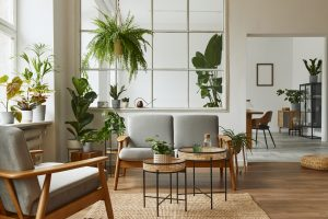 photo of living room with plants